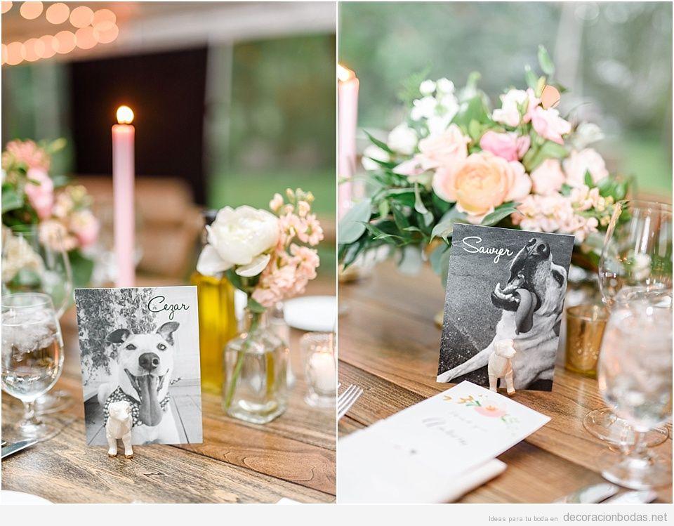 Ideas decoración bodas dog friendly o con perros 9