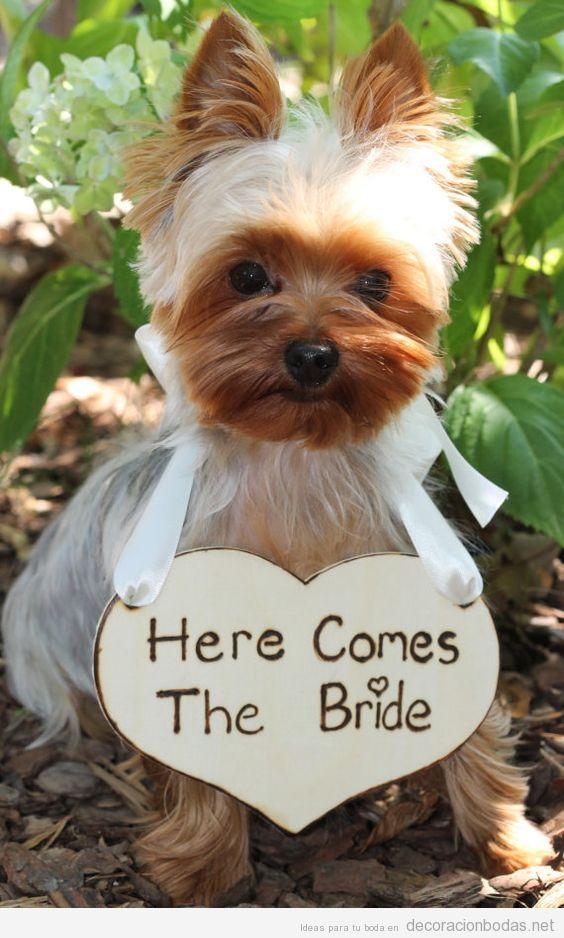 Ideas decoración dog friendly o con perros 4