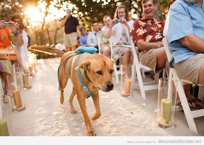 Ideas decoración bodas dog friendly o con perros 8