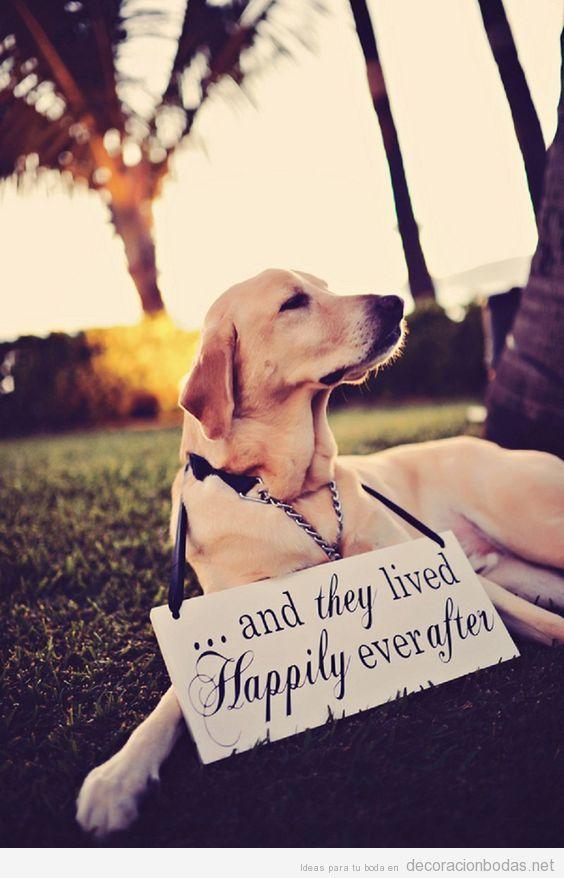 Ideas decoración bodas dog friendly o con perros 3