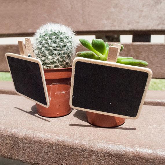 Cactus con pizarrita