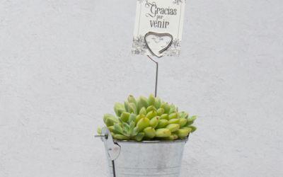 Cactus y suculentas como regalos para invitados de bodas: ¡Qué original!